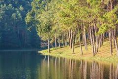 Natural Spruce Woodland Stock Photos