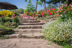 Natural stairway in the garden Stock Photo