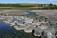 Natural Stepping stones when the tide is out Stock Photos