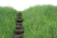 Natural Steps on the background of green grass Royalty Free Stock Photography