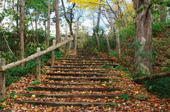 Natural steps and a railing with fall leaves all around Royalty Free Stock Images
