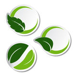 Natural stickers with leaf Royalty Free Stock Photo