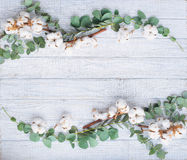 Natural still life with eucalyptus and cotton flowers Royalty Free Stock Images