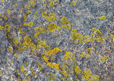 Natural stone with patches of lichen Royalty Free Stock Image