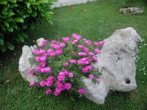 Natural stone planter filled with pink flowers stock photo