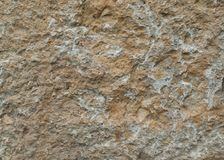 Natural stone slab texture lime rock royalty free stock images