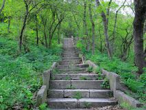 Natural stone staircase rises in the spring fresh green forest stock photography