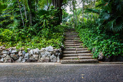 Natural stone stairs in garden Stock Images