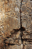 Natural stone structure. Stock Photo