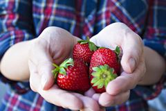 Natural strawberries directly from the garden beds royalty free stock photos