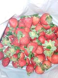 Natural strawberries with leaves stock image