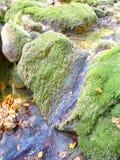 Natural stream Royalty Free Stock Photo