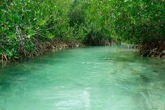 Natural stream and mangroves Royalty Free Stock Image