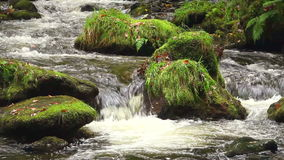 Natural stream Royalty Free Stock Photography