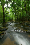 Natural stream water fall in Jungle Stock Photos