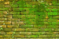 Natural style on old wall Royalty Free Stock Photos