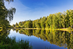 Natural summer background with birch trees in sunny day. Royalty Free Stock Photography