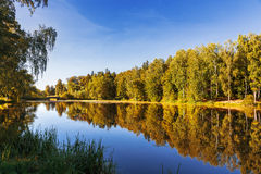 Natural summer background with birch trees in sunny day. Stock Photography