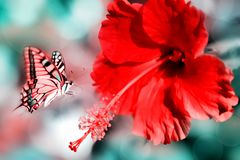 Natural summer background. Red pink butterfly on the beatiful red flower. Natural summer artistic image vector illustration