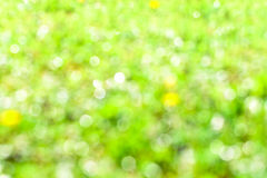 Natural summer defocused background Stock Image