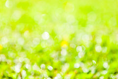 Natural summer defocused background Royalty Free Stock Photos
