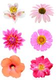 Natural summer flowers Royalty Free Stock Images