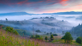 Natural summer scene in the mountain valley. Royalty Free Stock Photography