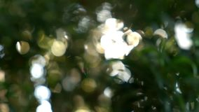 Natural sunlight bokeh and flare through green leaf trees. Morning in garden with sunshine stock video footage