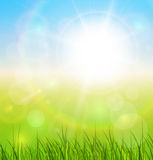 Natural sunny background Stock Photography