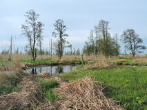 Natural swamp, Lithuania Royalty Free Stock Image