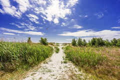 Natural swedish beach in summertime Royalty Free Stock Images