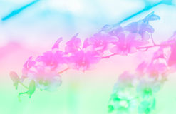 Natural sweet color orchid in soft color and blur style Royalty Free Stock Photos