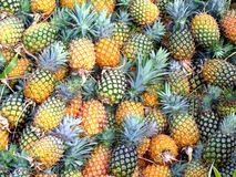 Natural sweet - pineapple Royalty Free Stock Photography
