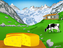 Natural swiss dairy cheese Stock Images