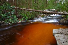 Natural tannin colored stream in the mountains Royalty Free Stock Images