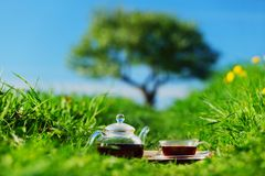 Natural tea Royalty Free Stock Photos