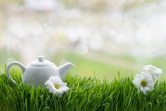 Natural tea on green grass Royalty Free Stock Photo