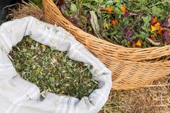 Natural tea herbs Royalty Free Stock Photos