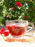 Natural tea from rose-petals on the background of rose bush Stock Photography