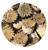 Natural textur built of dried flowers Stock Photography