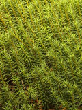 Natural texture Stock Photography