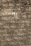 Natural texture Stock Images
