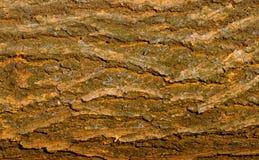 Natural texture Royalty Free Stock Photo