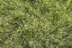 Natural texture. Bristly grass Stock Images