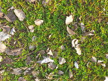 Natural texture of dry leaves on ground Stock Image