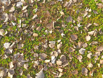 Natural texture of dry leaves on ground Stock Photos