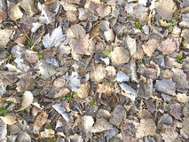 Natural texture of dry leaves on ground Royalty Free Stock Images
