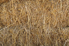 Natural texture of dry straw Royalty Free Stock Images