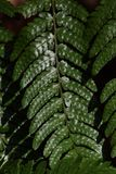 Fern leaves. Natural texture of fern leaves Stock Image