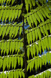 Natural texture formed by leaf tree fern Stock Photos